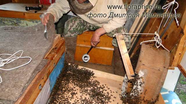 Что сделать чтобы пчелы не роились Своими руками - Как сделать самому 80