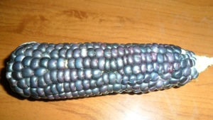 Кукуруза. Сорт Black Waxy Corn