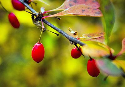 ;плодовые деревья и кустарники