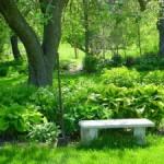скамеечка в саду