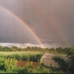 радуга над опушкой леса и полоской ржи