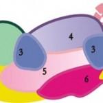 схема расположения растений в цветнике