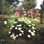 Один из любимых уголков сада