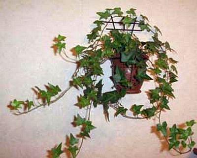 Комнатные растения - Фото Ирины Лукьянчик