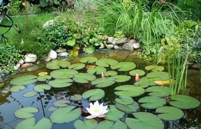 Какие бывают водоемы в саду из чего