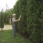 Стрижка растений ножницами