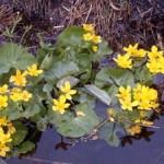 цветник у водоема