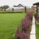 газон, живая изгородь