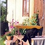 настурция и коты
