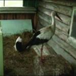 на птицеферме