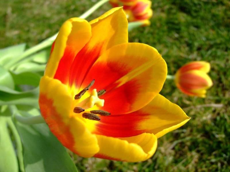 Самые дорогие цветы в мире Топ9