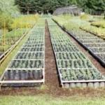 растения в питомнике