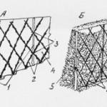 схема шпалерной изгороди