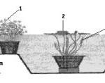 схема расположения растений в водоеме