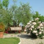 устройство садовых дорожек, контейнерное озеленение