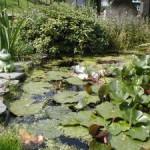 оформление искусственного водоема
