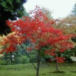 лиственные деревья в восточном саду