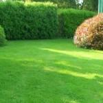 газон, зеленая изгородь