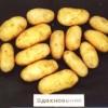 сорт картофеля Вдохновение