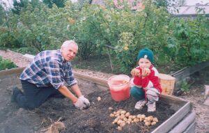 Борис Романов и урожай картофеля