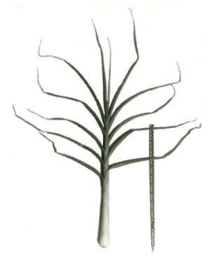Рис. 2. Лук порей Болгарский