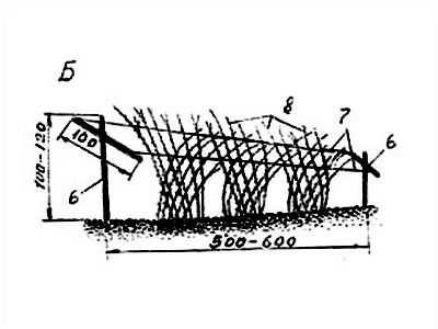 Рис. Б. Двухсторонняя шпалерная подвязка стеблей
