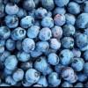 ягоды мериканской высокорослой голубики