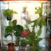 размещение растений во флорариуме