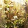 композиции во флорариуме