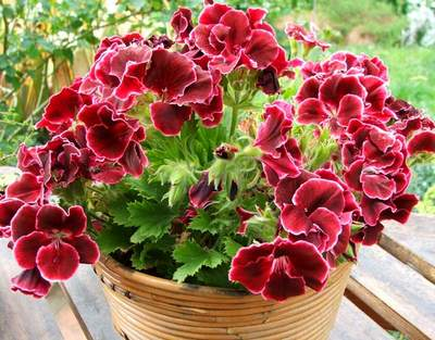 http://www.floraprice.ru/v2/wp-content/uploads/2009/10/62.jpg