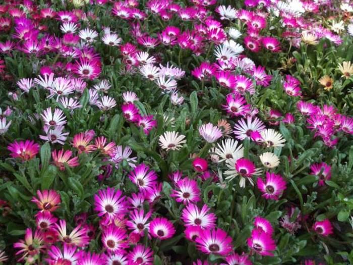 Цветы на клумбах названия фото