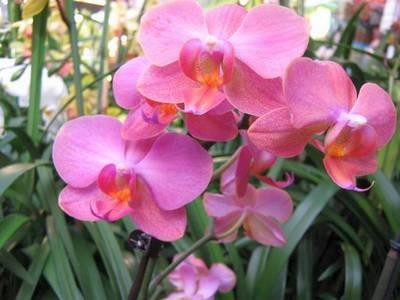 Автор: Admin Дата: 02.11.2013 Описание: Бисероплетение-МК орхидея.  Фенечки.  Для получения ссылки на полную версию...