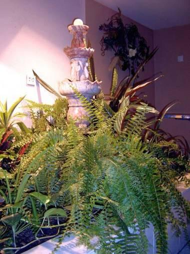 Зимний садик под лестницей с досветкой. Гониофлебиум