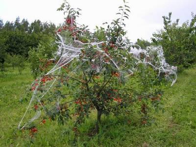 Защита урожая ягод от птиц