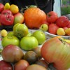 В конце сезона собрали богатый урожай разноцветных вкусных плодов