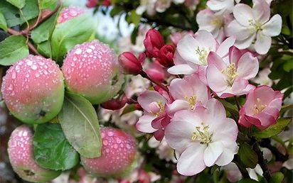 Личное подсобное хозяйство - плодовый питомник Всеволожский
