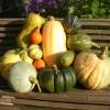 Урожай тыкв, выращенных в минувшем сезоне на огороде автора