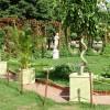 Использование растений в вазах и кадках