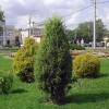Газон Парковый