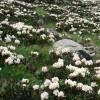 Альпийский луг в природе