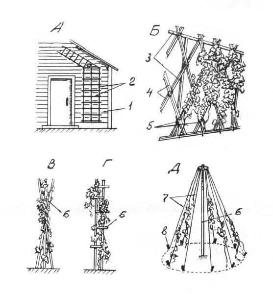 Схемы закрепления лиан на пристенном каркасе (А), опорной стенке (Б) и на отдельных опорах (В, Г, Д): 1 – стена; 2 – рейки; 3 – трубы; 4 – бруски; 5 – подвязка проволочная или шпагатная; 6 – рейки, бруски или трубы; 7 – бечевки; 8 – колышки.