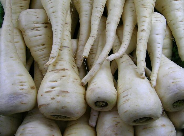 морковь белая фото