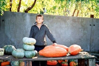 На фото: богатый урожай тыкв