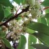 Цветение женского растения