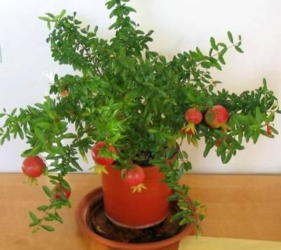 http://www.floraprice.ru/v2/wp-content/uploads/2011/03/gra_2.jpg
