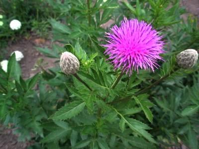 http://www.floraprice.ru/v2/wp-content/uploads/2011/03/levs.jpg