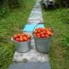 Собран урожай