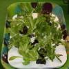 Овощи растут на гидропонике