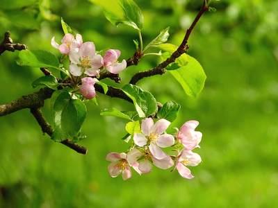 Июнь - цветут пионы