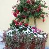 Контейнер с использованием комнатных растений